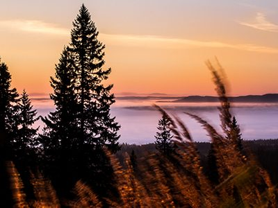Moln Skog
